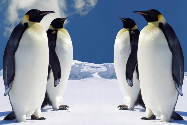 penguinsvspenguins